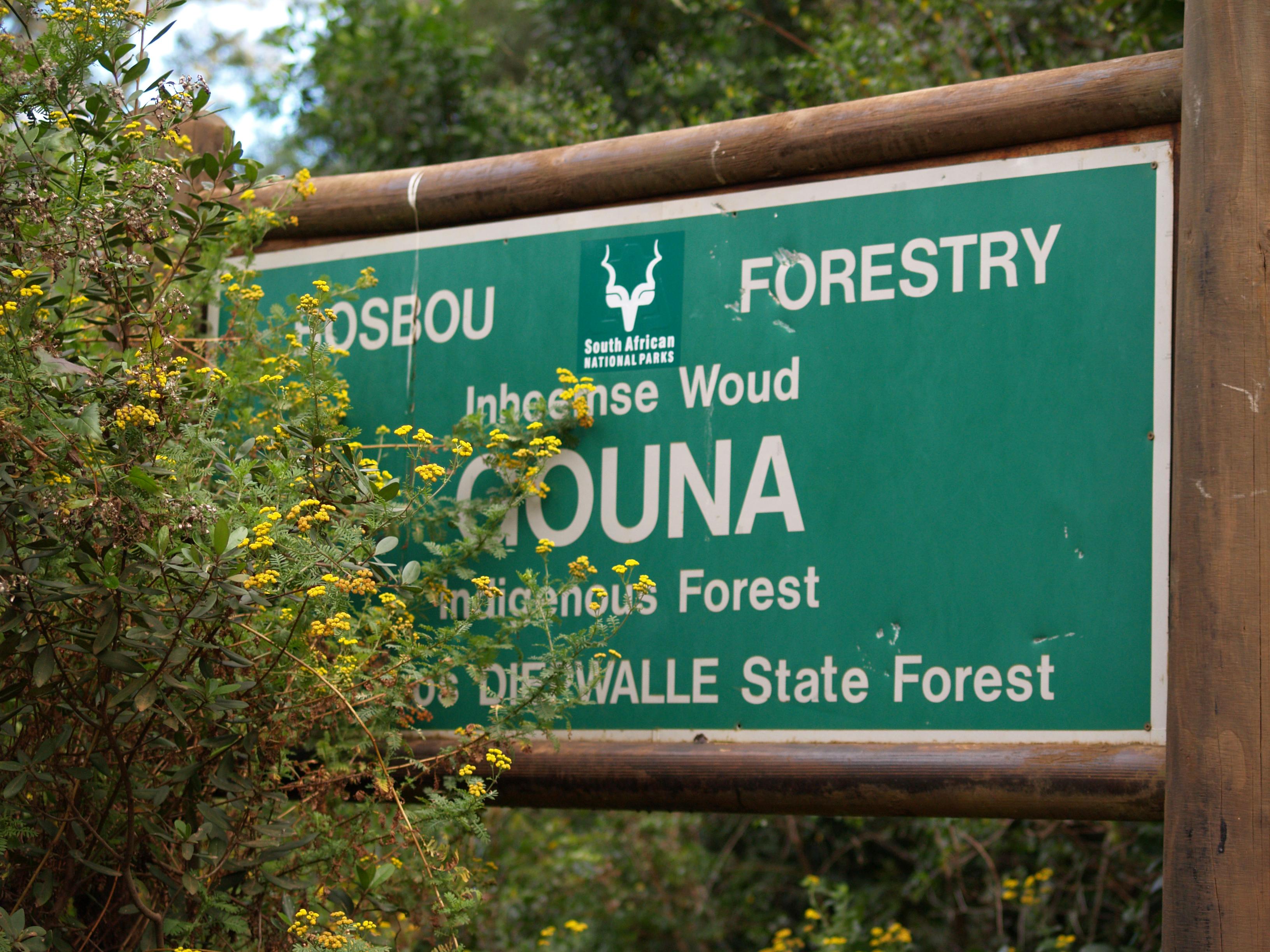 Gouna Forest