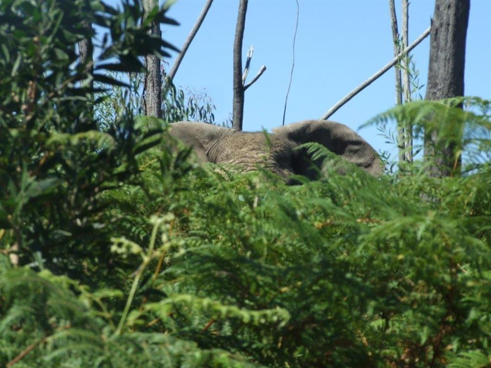 Maybe see a knysna elephant on our MTB trails